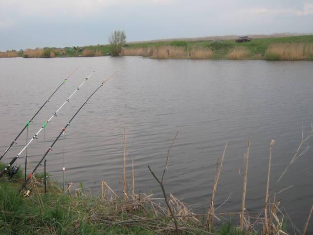 Пруды для рыбалки каталог