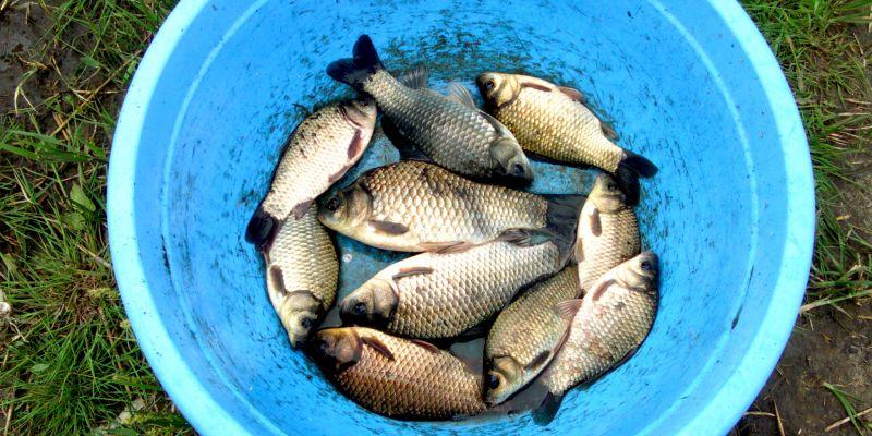 Фидер: попытки «договориться» с рыбой