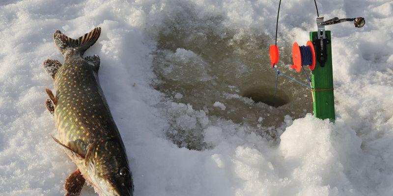 Ловля зимой крупной щуки на жерлицы