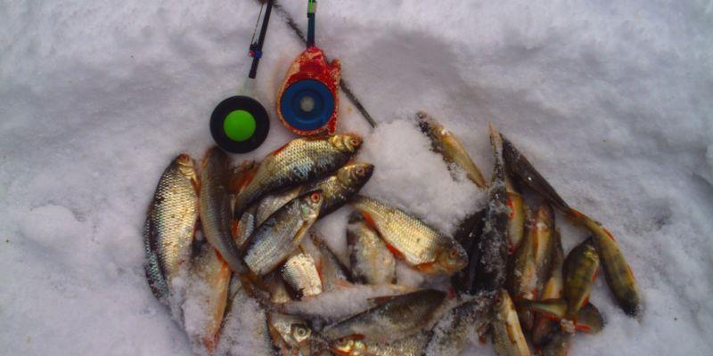 До конца  марта лимиты на вылов будут установлены для всех рыболовов-любителей страны