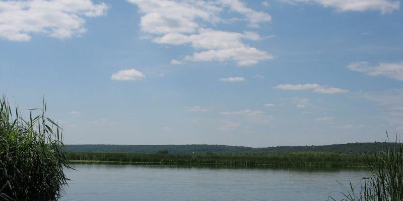 В Воронежское водохранилище выпустили почти 1.5 млн экземпляров молоди толстолобика