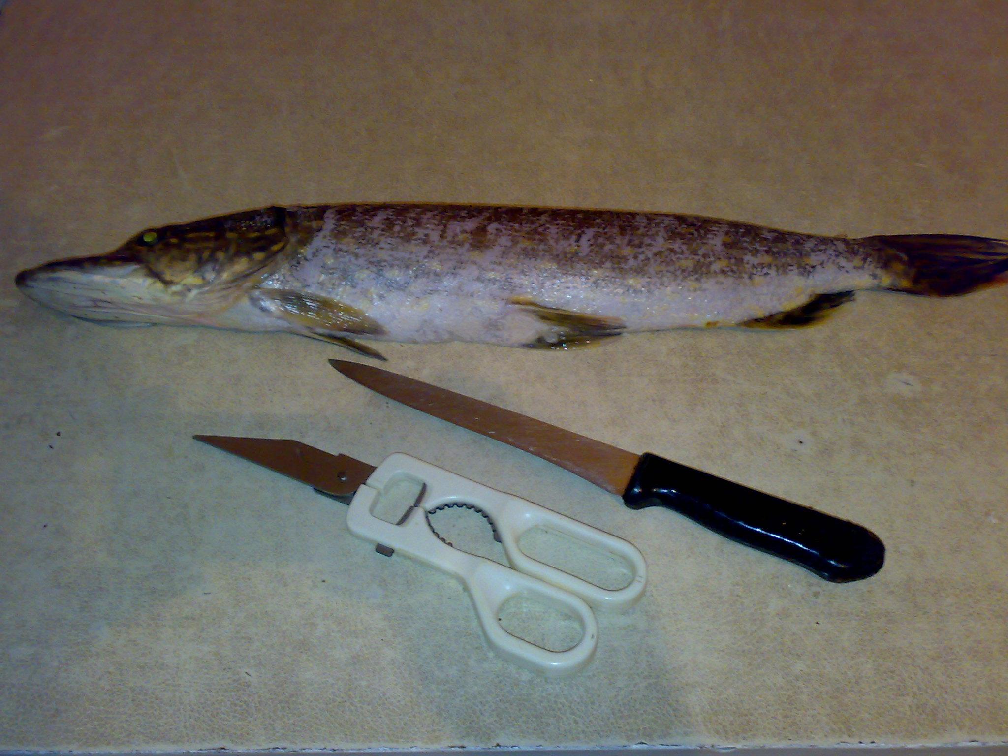 Фаршированная щука, лучший рецепт, инструмент для подготовки рыбы