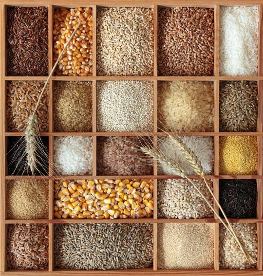 Принципы составления прикормочных смесей, набор прикормочных смесей, фото