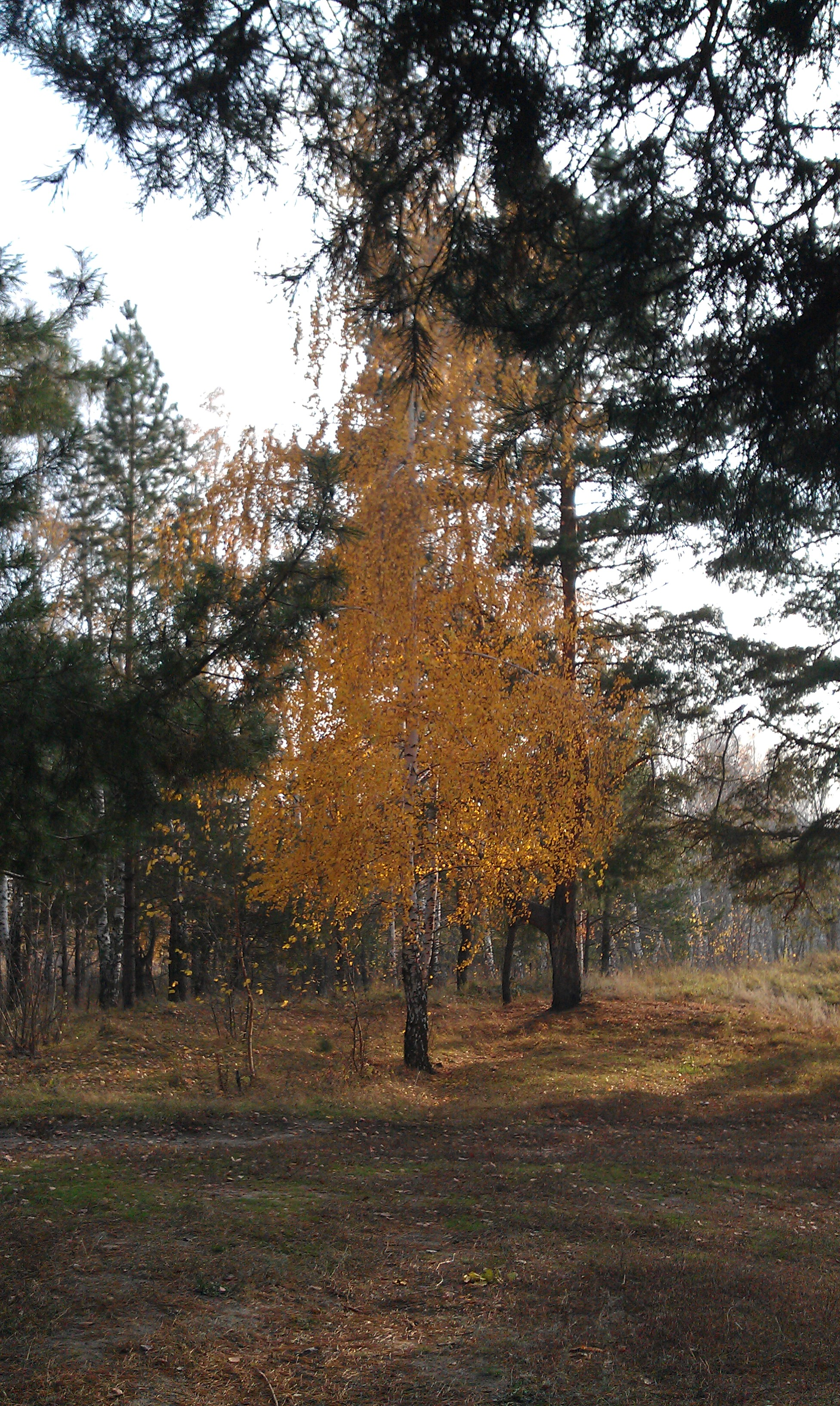 Ловля окуня осенью, осенний лес у водоёма, подробное фото