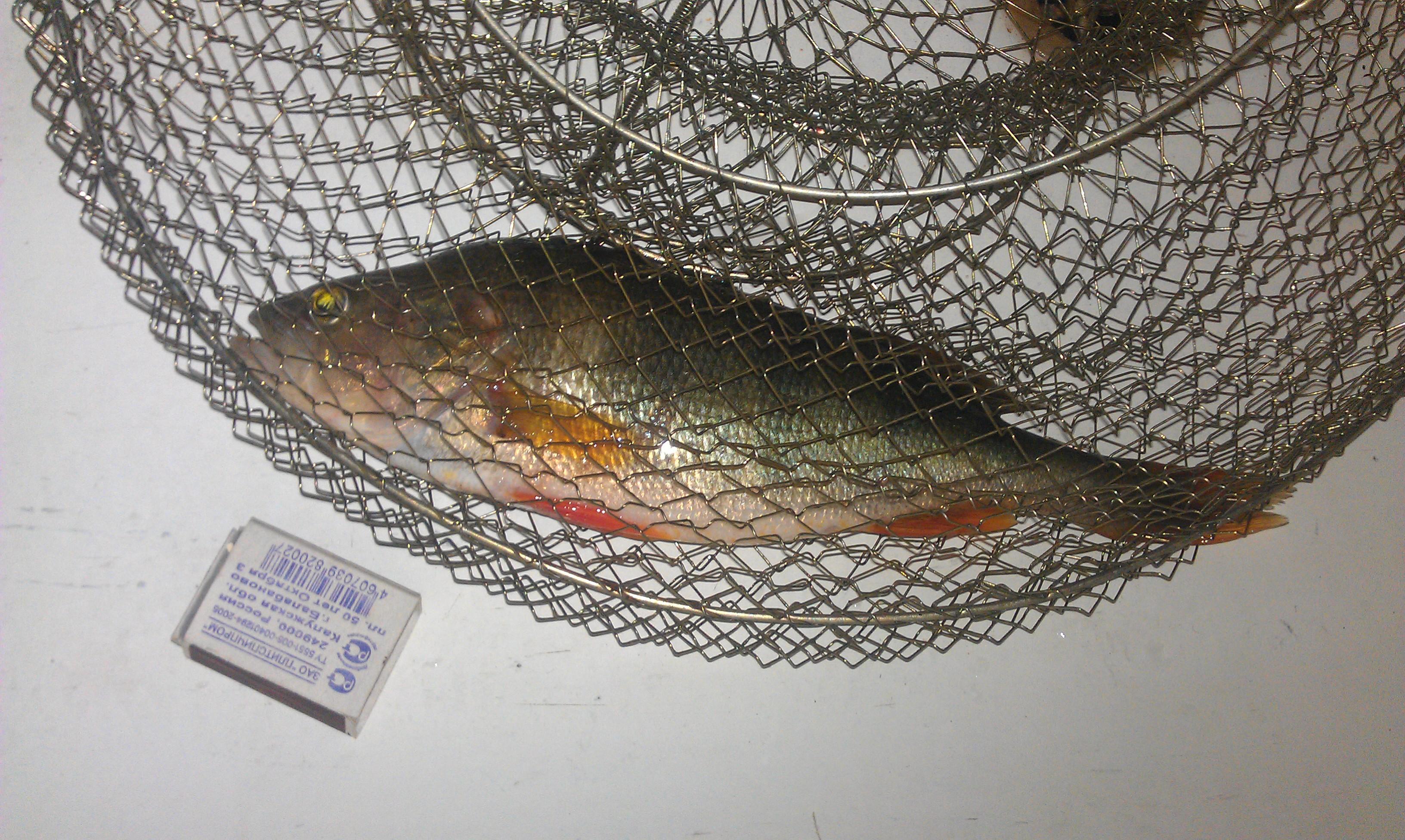 Ловля окуня осенью, окунь на осенней рыбалке, фото