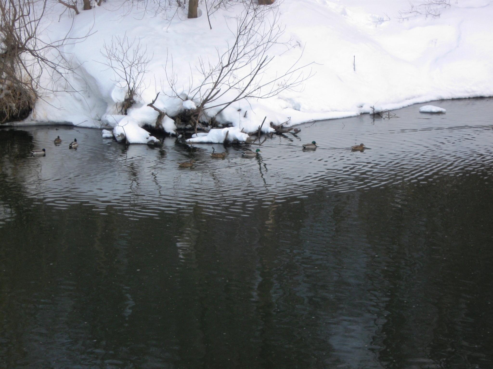 Новогодние приключения на льду, зимний вид на реку перед рыбалкой, качественное фото