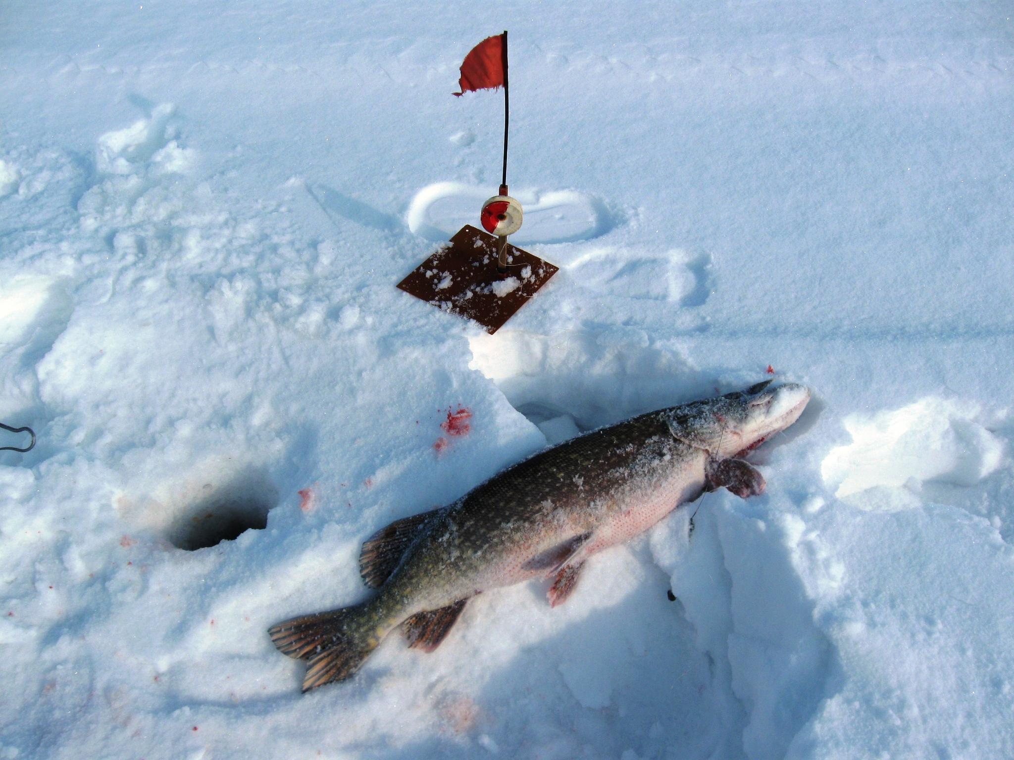На льду в канун новогодья, предновогодняя щука из ополонки, фото