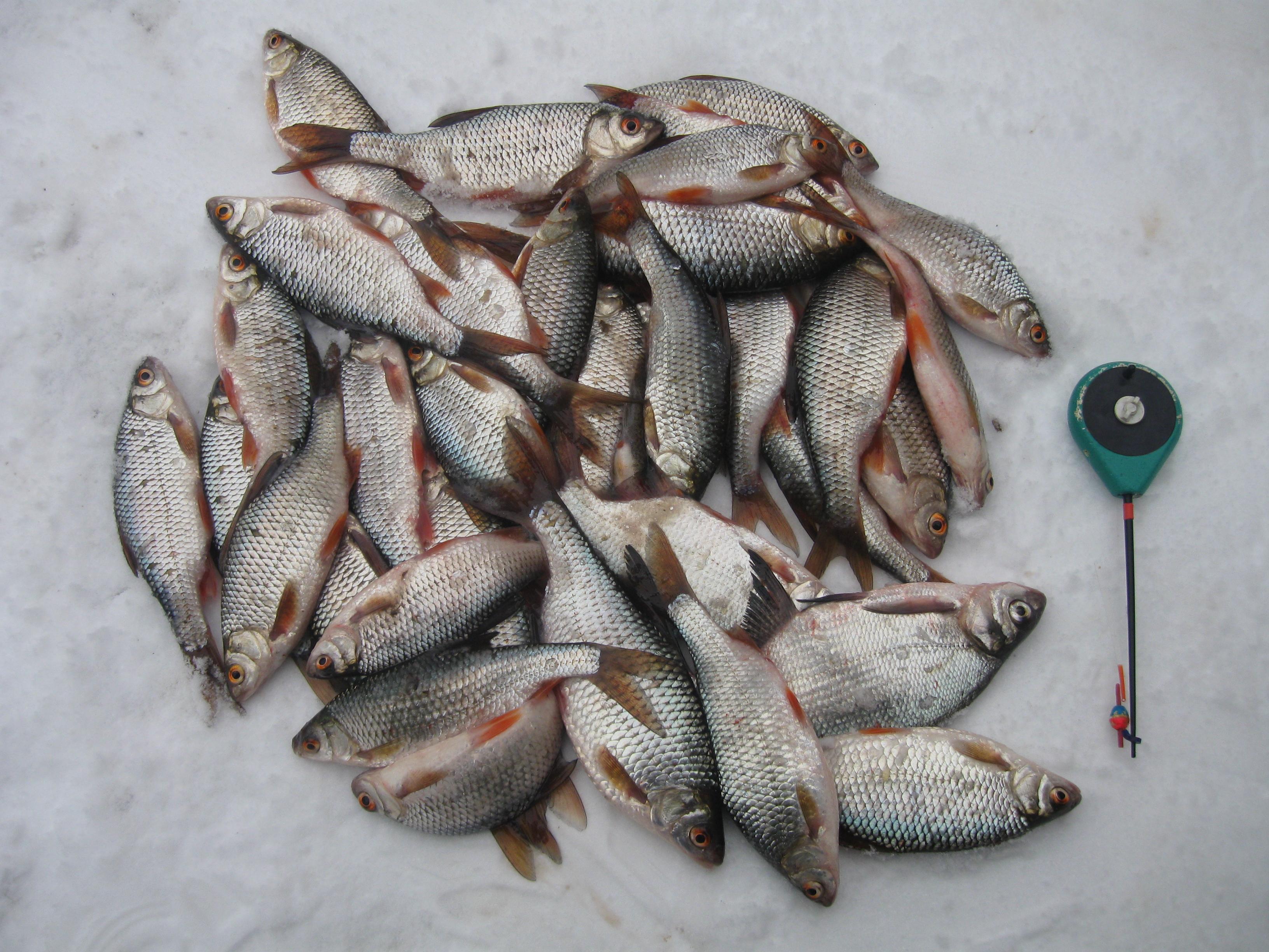 как клюет рыба все о рыбалке