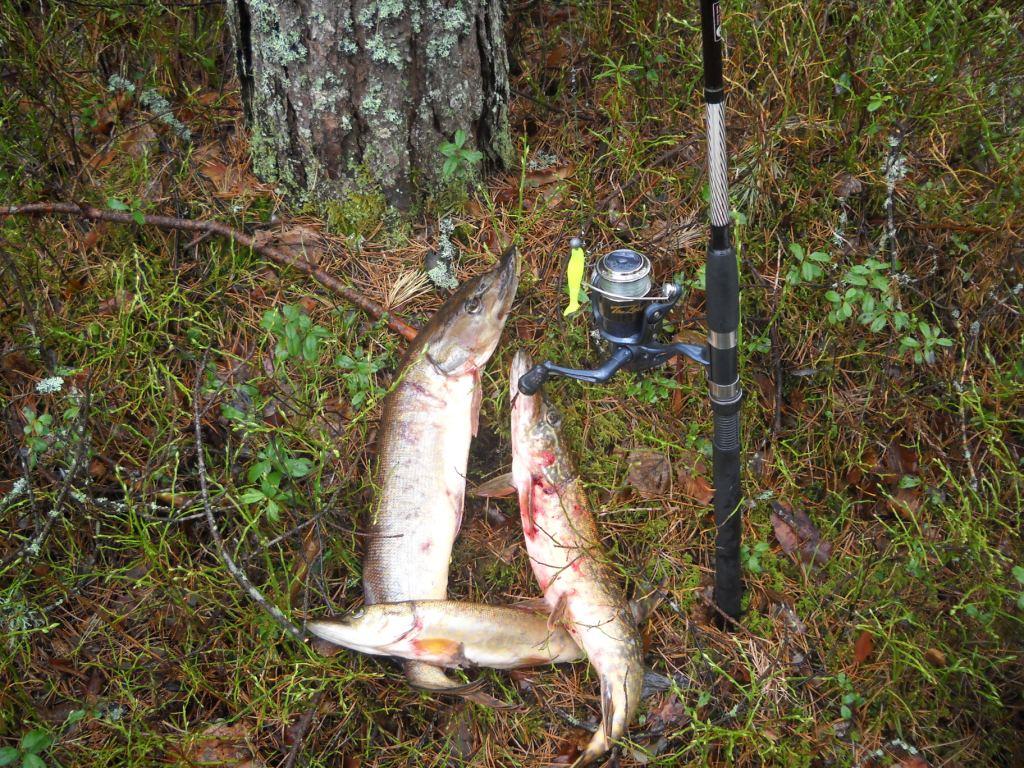 рыбалка без границ ловля карпа и толстолобика