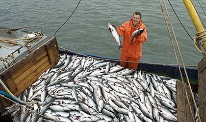 ЕТКС: Рыбак прибрежного лова