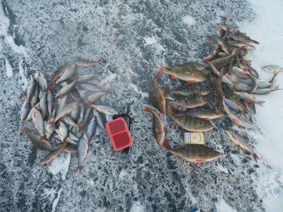 отчеты по рыбалке шугуняк