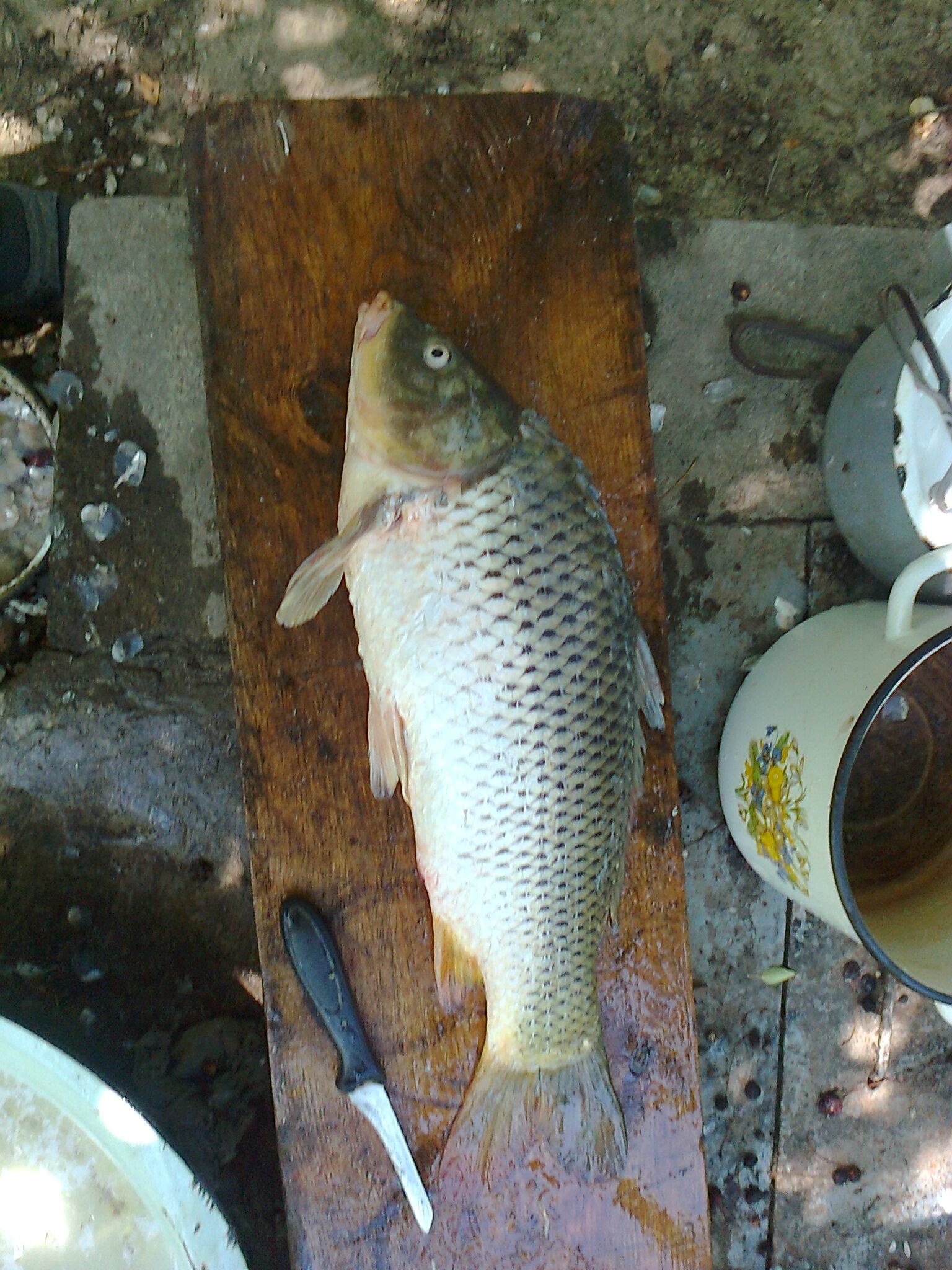 клюет ли рыба при низком давлении осенью